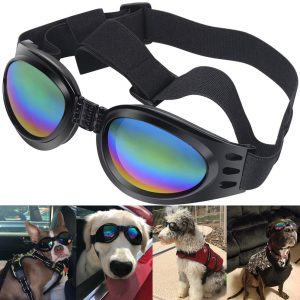 small dog sunglasses